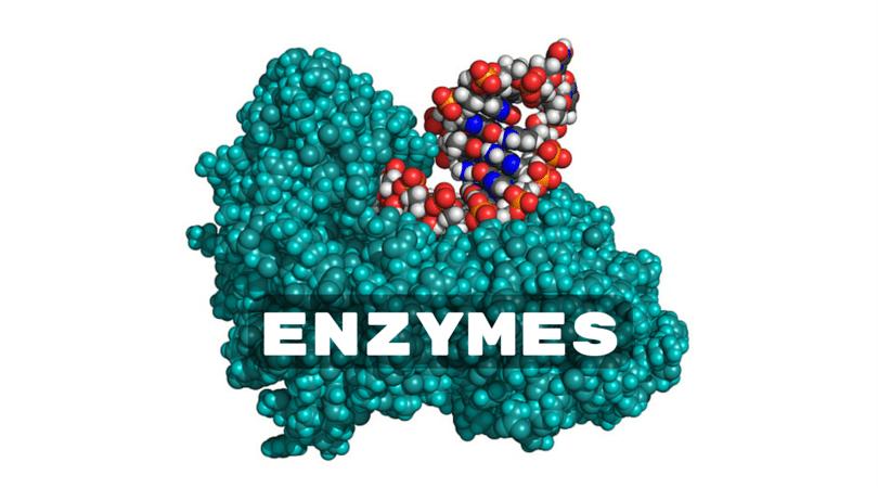 آنزیم آزمایشگاهی | فروش آنزیم آزمایشگاهی | خرید آنزیم آزمایشگاهی | آنزیم | enzyme